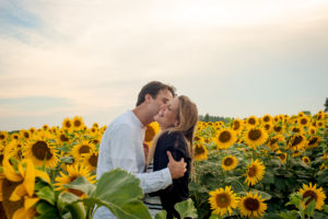 sunflowers proposal provence